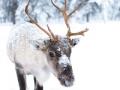 Annual North Jackson Reindeer 5K Run